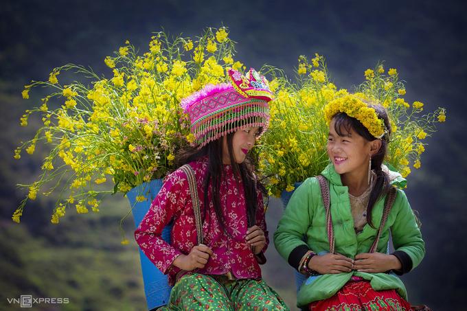 Hai bé gái người H'Mong trong mùa hoa cải vàng ở Phố Cáo.