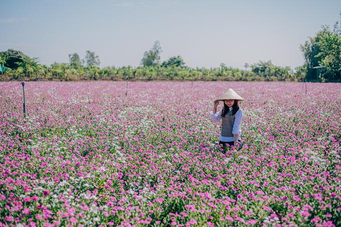 Vẻ đẹp của đồng hoa đã thu hút nhiều bạn trẻ đến check-in và các nhiếp ảnh gia đến sáng tác. Bạn Trúc Vi, đến từ TP Long Xuyên, chụp ảnh tại lối đi giữa các thửa hoa dừa cạn.