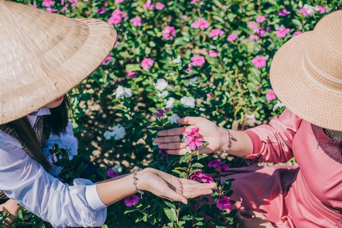 Vi cho biết, cô ấn tượng với vẻ đẹp của cánh đồng hoa, đồng thời lưu ý du khách chụp ảnh không giẫm đạp hay bứt hoa, bẻ cành tạo dáng.