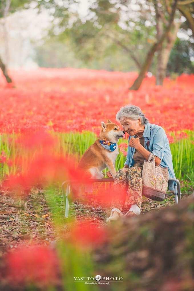 Không thể đưa bà ra nước ngoài vì sức khỏe không cho phép, Yasuto đã thu xếp lịch trình hợp lý với các điểm đến trong nước. Anh đưa bà ngoại đi ngắm hoa nở bốn mùa trên khắp nước Nhật.