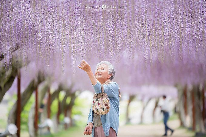 Cuối xuân đầu hè, anh đưa bà đến đường hầm hoa tử đằng ở công viên hoa Ashikaga thuộc quận Tochigi, Nhật Bản, nơi có hàng nghìn cây hoa khoe sắc hàng năm.