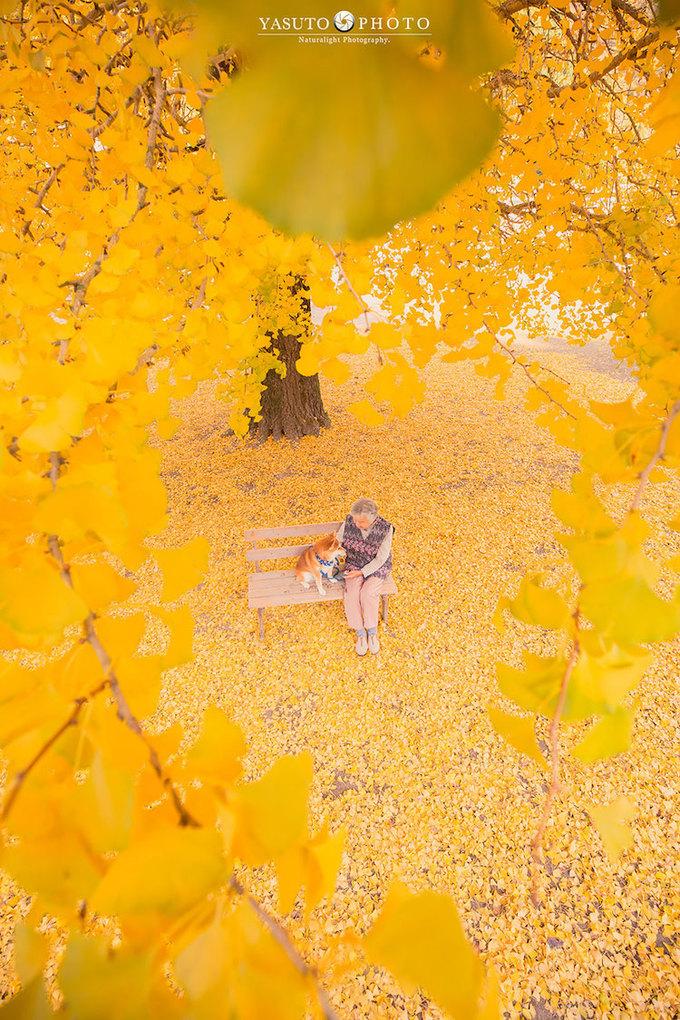 Mùa thu, Yasuto lại cùng bà và cún inu shiba ngắm lá vàng ở Kyoto. Bà ngoại nhiếp ảnh gia ngồi dưới một cây rẻ quạt trăm năm tuổi.