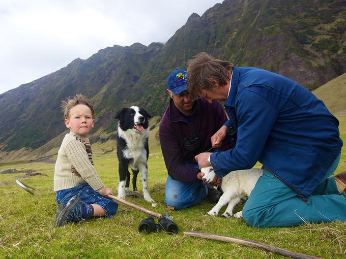Chăn nuôi gia súc là công việc phổ biến nhất trên đảo. Một số loài động vật được nuôi để lấy thịt và sữa là bò, cừu, gà, ngỗng. Lông cừu được tận dụng làm len. Trên đảo có một nhà máy để sản xuất len, thực hiện các công đoạn chải, kéo sợi thủ công. Ảnh: Andy Isaacson.