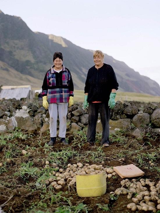 Đất núi lửa không thích hợp để nhân giống, trồng các loại cây ăn quả. Vì vậy, khoai tây và đậu là sản phẩm thay thế. Sau mùa thu hoạch, ngoài làm thức ăn, người dân còn gửi tặng khoai tây tới đảo St Helena. Chỗ dư thừa làm thức ăn cho gia súc.  Khoai tây được trồng thành từng ô nhỏ trong các mảnh vườn. Với điều kiện đặc biệt, khoai tây ở đây không gặp các loại bệnh thường có ở đất liền. Ảnh: Tristan.
