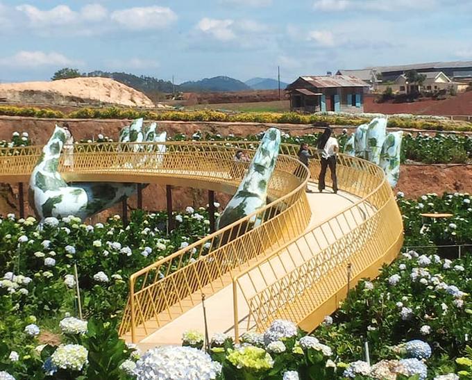 Câu cầu Vàng ở cánh đồng cẩm tú cầu Trại Mát. Ảnh: Tiến Đà Lạt