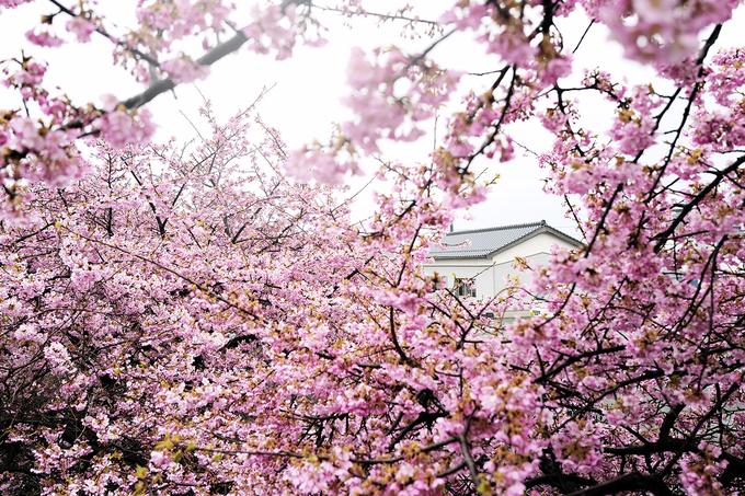 Tottori được xem là tỉnh có cuộc sống khá yên bình và không khí trong lành. Tỉnh cách thủ đô Tokyo 666 km, dân số gần 600.000 người; gồm 4 thành phố Kurayoshi, Sakaiminato, Tottori, Yonago.