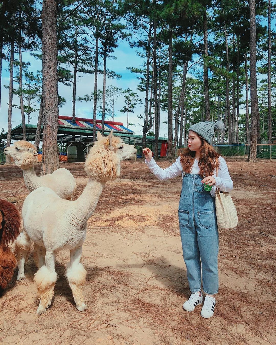Hướng dẫn đường đến sở thú Zoodoo Đà Lạt - iVIVU.com