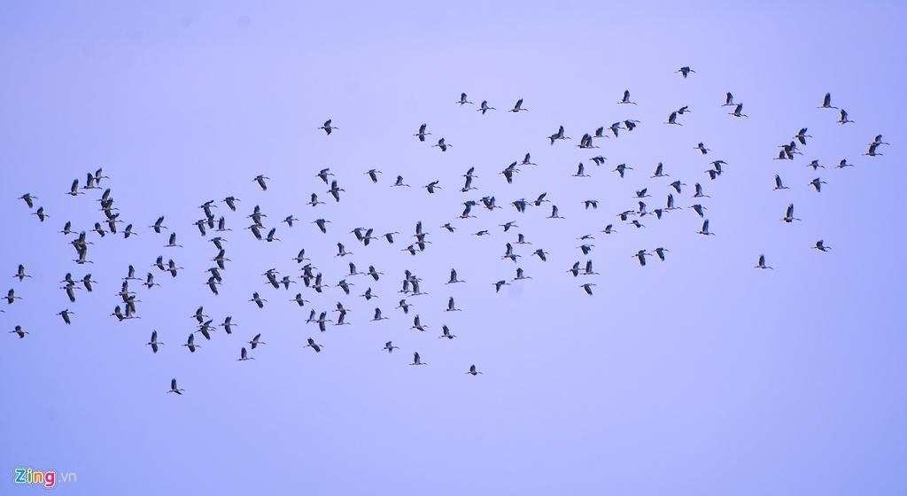 Khám phá đầm An Khê, du khách có thể thưởng ngoạn khung cảnh đàn vịt trời tung cánh trên bầu trời..