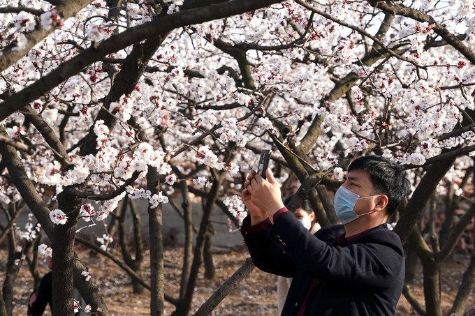 Du khách chụp hoa nở ở làng Zhanggou, huyện Baofeng, tỉnh Hải Nam. Mặc dù ít khách tham quan do Covid-19, những người có thể tới vườn hoa thời gian này đều đeo khẩu trang phòng bệnh. Ảnh: Gengyan Ju.