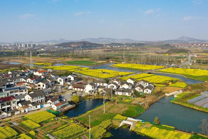 Hiện nay, khoảng 600.000 bông hoa tulip và hàng chục nghìn m2 hoa cải dầu đang nở rộ ở làng Xujiayuan, phố Guli, quận Jiangning, Nam Kinh. Phong cảnh nông thôn và mùa hoa tại đây được khách tham quan đánh giá là gợi cảm giác mạnh mẽ về mùa xuân. Ảnh: Xinhua.