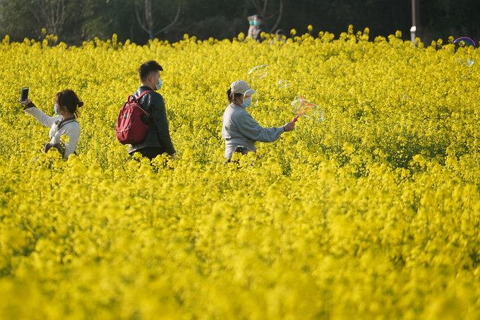Du khách ở cánh đồng hoa cải dầu tại làng Xujiayuan, huyện Jiangning, tỉnh Giang Tô ngày 14/3. Ảnh: Xinhua.