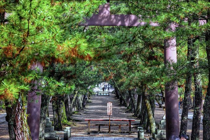 Từ quốc lộ tới đền phải đi bộ 300 m qua ba cổng Torii truyền thống, với hai bên đường trải đá là bốn hàng cây tùng cổ thụ hàng trăm năm tuổi, nhiều cây có đường kính gốc hơn 2m.