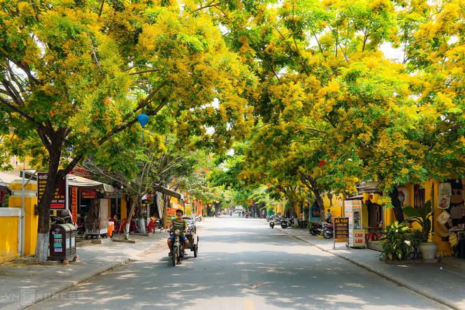 Hai bên đường Phan Chu Trinh rợp sắc hoa sưa vàng. Nhiếp ảnh gia Đỗ Anh Vũ (Hội An), tác giả bộ ảnh, cho biết ở phố cổ có 2 tuyến đường chính trồng hoa sưa là Nguyễn Huệ và Phan Chu Trinh, mỗi nơi có 20 cây.