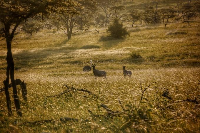 """Họa sĩ Trần Thùy Linh đã có chuyến """"phượt"""" tới công viên quốc gia Serengeti, cùng bạn bè. Trong tiếng thổ dân Maasai, Serengeti có nghĩa là Cánh đồng bất tận. Khung cảnh hoang dã ở các đồng cỏ cho chị nhiều cảm hứng để sáng tác hội họa."""