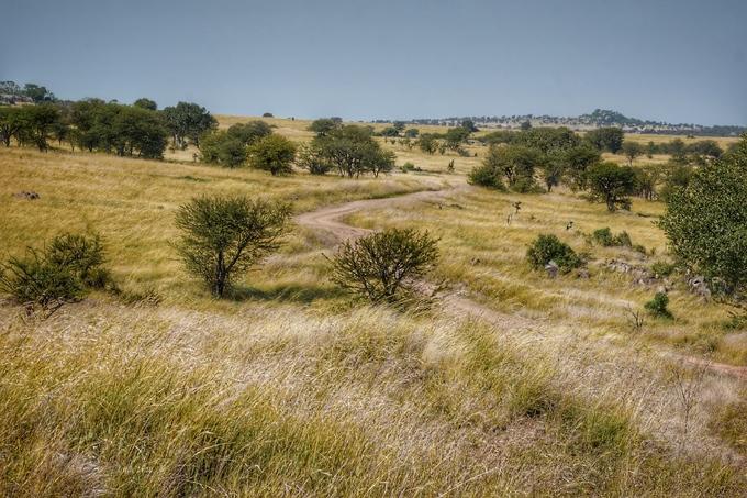 Có vô số đồng cỏ tươi trên diện tích khoảng 14.700 km2, công viên quốc gia này là nơi tụ tập của rất nhiều loài thú ăn cỏ, với khoảng 1,3 triệu con dê, 60.000 con ngựa vằn và 150.000 con linh dương... Và bởi lý do đó, các loài thú săn mồi cũng sinh sống tại đây như sư tử, linh cẩu đốm, báo đốm, cá sấu...