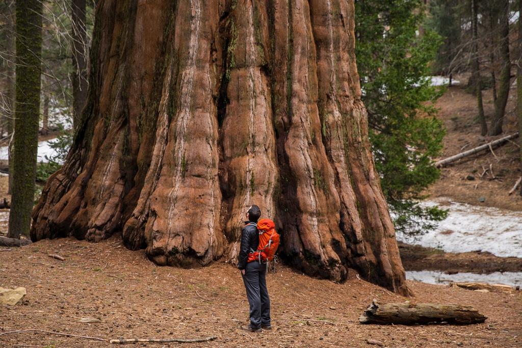 """Công viên quốc gia Sequoia: Sequoia National Park, ở phía nam Sierra Nevada, bang California, được mệnh danh là """"vùng đất của người khổng lồ"""". Bên trong công viên là những cây hồng sam có thể sống hơn 2.000 năm và cao trung bình từ 60-90 m, tương đương tòa nhà 26 tầng. Khi đến nơi, bạn sẽ có cảm giác như lạc trong xứ cổ tích. Ảnh: Bound to Explore."""