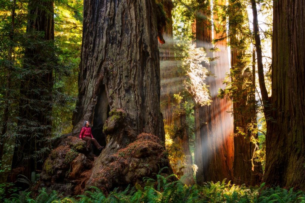 Vườn quốc gia và vườn bang Redwood: Nằm dọc bờ biển tiểu bang California, công viên quốc gia Redwood là nơi bảo tồn nhiều loại động thực vật bản địa, đồng cỏ thảo nguyên, di tích văn hóa, nhiều sông suối và khu vực bờ biển trải dài 60 km. Vườn quốc gia này bảo vệ 45% diện tích còn lại của loài hồng sam Bắc Mỹ hay cù tùng nguyên sinh vẫn đang sinh trưởng. Ảnh: National Geographic. Năm 1968, công viên quốc gia Redwood được thành lập và đến năm 1980, nơi này được công nhận là Di sản thế giới. Cây gỗ đỏ Hyperion cao nhất trên Trái Đất sinh sống ở nơi này. Hyperion có chiều cao hơn 115 m, được phát hiện bởi Chris Atkins và Michael Taylor vào năm 2006. Vị trí cụ thể của cây không được các nhà khoa học tiết lộ vì lo ngại du khách có thể làm hại nó. Ảnh: Audley