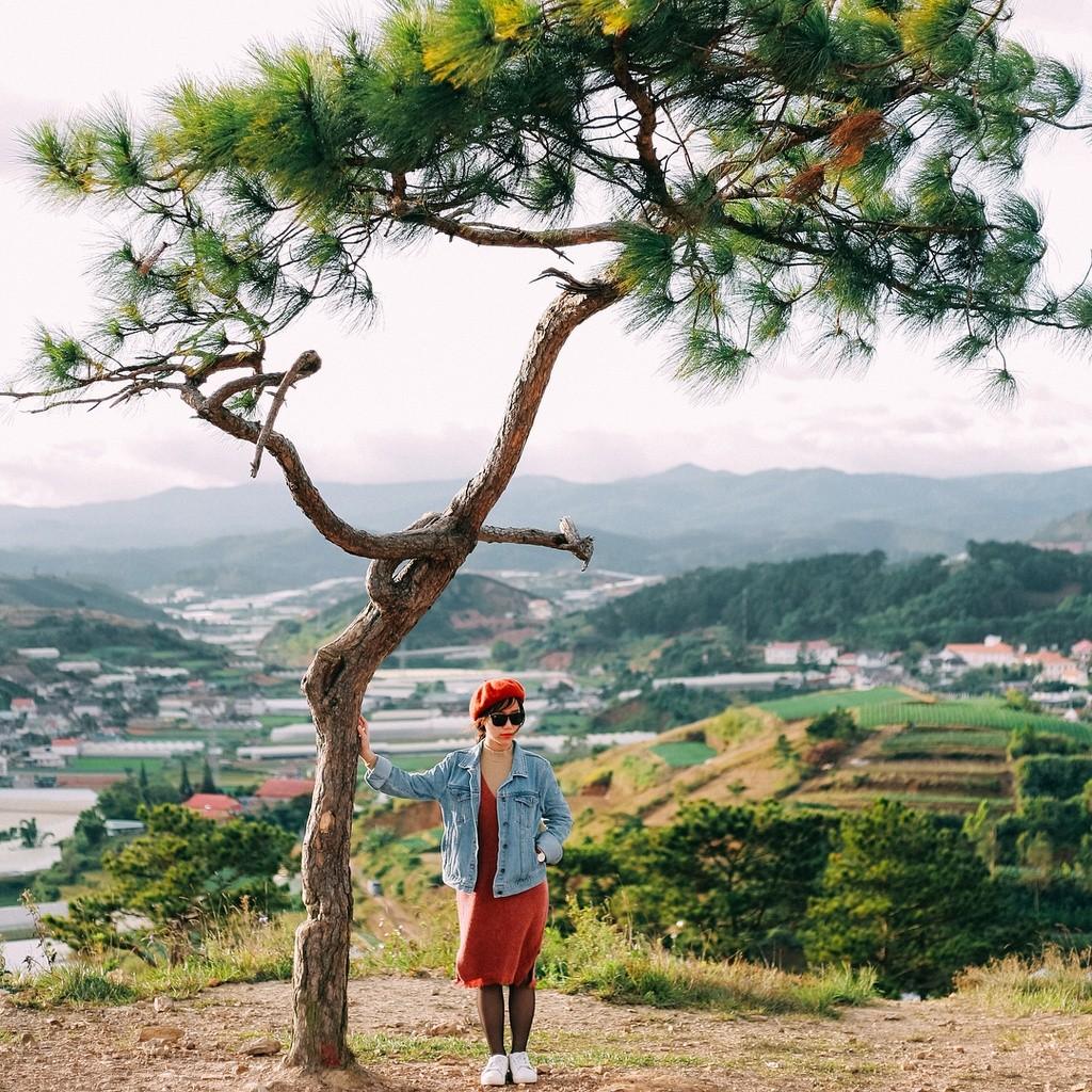 """Đứng trên đỉnh đồi, bạn có thể quan sát toàn cảnh ngoại ô Đà Lạt. Những đồi thông trải dài miên man, nhà kính của người nông dân và núi Langbiang huyền thoại ở phía xa. Chính giữa ngọn đồi là """"cây cô đơn"""" - một trong những tọa độ sống ảo thu hút giới trẻ. Ảnh: Dhthu."""
