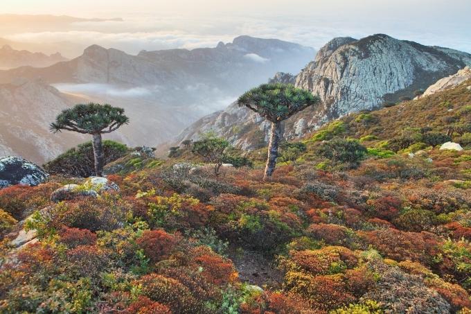 Đảo Socotra (Yemen) như bối cảnh phim khoa học viễn tưởng với hơn 700 loài thực vật hiếm. Đây là một mảnh của siêu lục địa cổ đại Gondwanna - nơi từng bao gồm cả Nam Cực, Nam Mỹ và châu Phi. Quần đảo có tầm quan trọng vì tính đa dạng sinh học của nó, với hệ động thực vật phong phú và khác biệt, bao gồm: 37% loài thực vật (tương ứng 825 loài), 90% bò sát và 95% loài ốc ở Socotra không có ở bất cứ nơi nào khác trên thế giới.