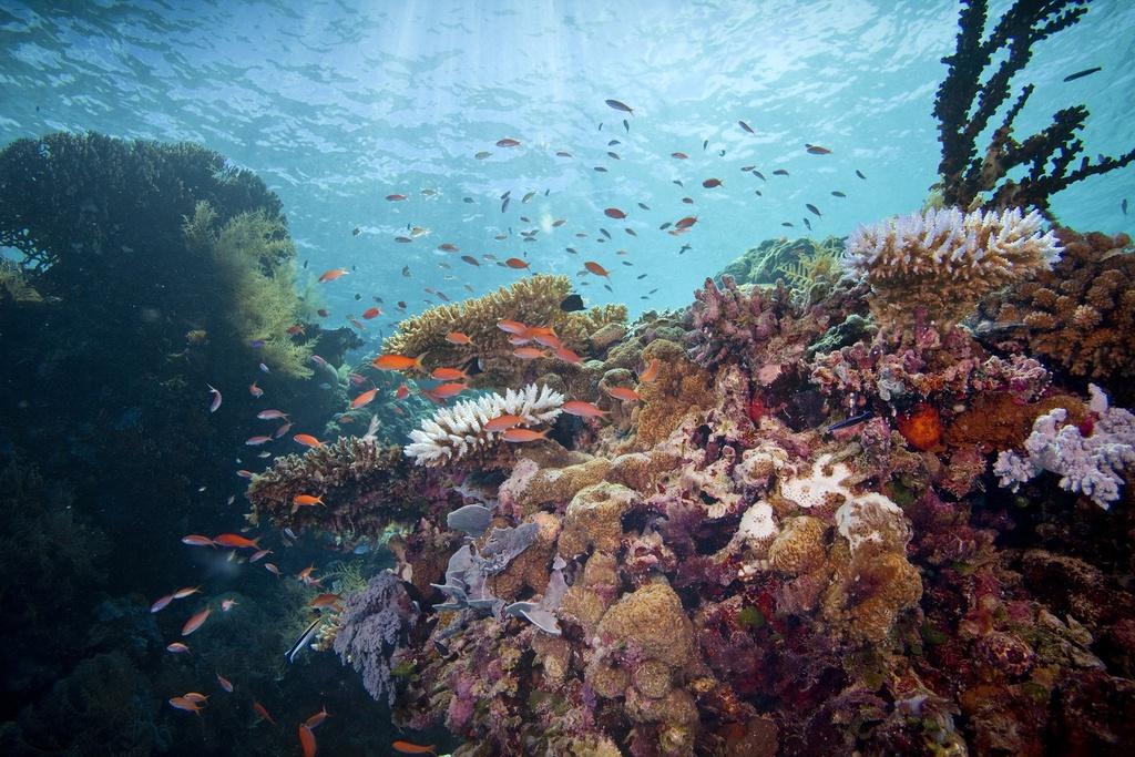 Bạn có thể đi tour khám phá những hòn đảo tuyệt đẹp hay lặn biển ngắm nhìn rạn san hô lộng lẫy và động vật biển phong phú. Đây cũng là một trong những điểm lặn lừng danh nhất thế giới. Ảnh: Nature.