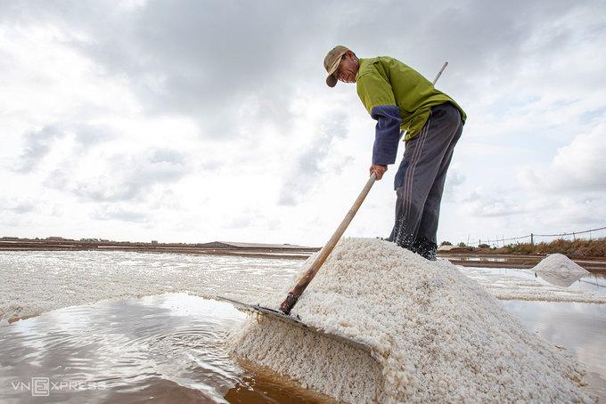Sau 12 - 18 ngày, nước biển bốc hơi tạo thành muối. Lúc này diêm dân dùng cào thu hoạch muối. Họ thường cào vào sáng sớm hoặc đầu giờ chiều. Sau đó để khoảng 3 - 4 giờ cho rút nước rồi đổ muối vào xe đẩy, vận chuyển đến nơi tập kết.