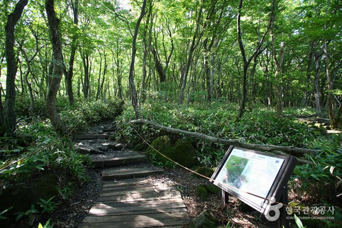 Công viên Hallasan được UNESCO công nhận là di sản thiên nhiên của thế giới. Nơi đây có ngọn núi Hallasan - đỉnh núi cao nhất ở Hàn Quốc, cũng là địa điểm leo núi yêu thích của người Hàn.