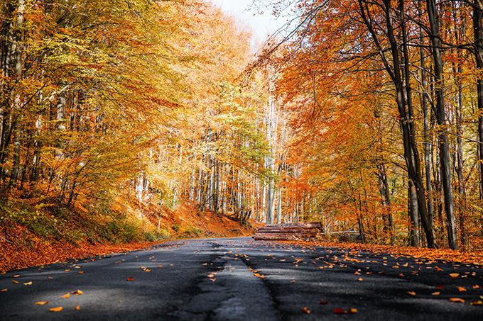 Công viên quốc gia Hallasan đẹp nhất vào mùa thu, khi cây cối chuyển màu đan xen giữa vàng - cam - đỏ, tạo nên bức tranh rực rỡ, đẹp nao lòng. Đây cũng là thời điểm khu vực này đón nhiều du khách nhất trong năm.