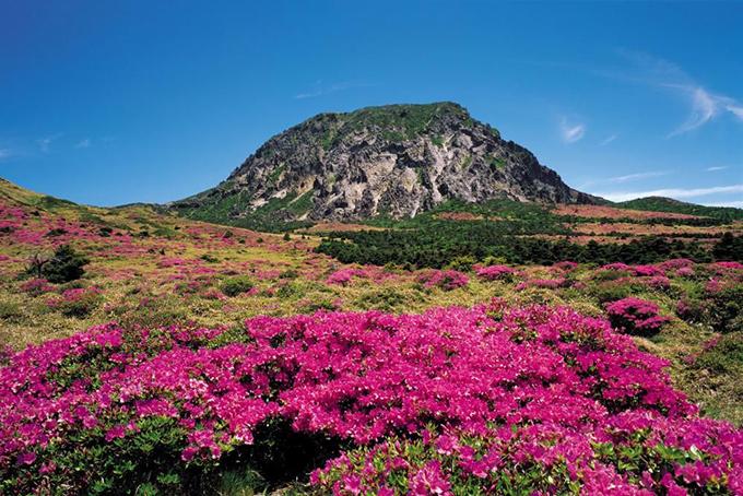 Công viên có hơn 4.000 loài động vật và trên 1.800 loại thực vật, bao gồm cả những loài đối diện với nguy cơ tuyệt chủng. Cảnh quan núi Hallasan bốn mùa tươi đẹp, đặc biệt là vào mùa hoa đỗ quyên. Trên đỉnh núi có một hồ nước trong xanh, thay đổi màu sắc và hình dáng theo mùa.