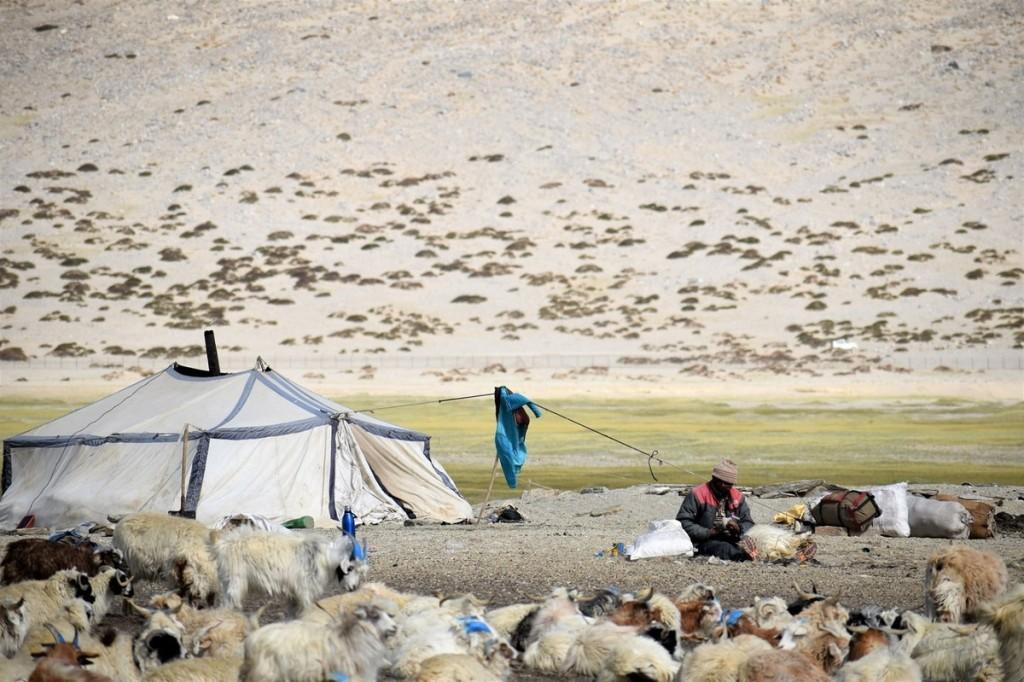 Người dân du mục ở Changtang được gọi là Changpa. Tính đến năm 1989, có khoảng nửa triệu người ở cao nguyên. Họ sinh sống dựa vào đàn gia súc. Do điều kiện thời tiết khắc nghiệt, người Changpa sống trong các khu định cư nhỏ có một hoặc nhiều gia đình trong vài tháng, lúc đồng cỏ vẫn còn xanh tốt. Khi chuyển mùa, họ sẽ di cư đến đồng cỏ khác, cách đó vài ngày đi bộ. Ảnh: Jungwa.  Một khu định cư Changpa có thể sở hữu tới 10.000 con vật. Khi đàn gia súc trở về vào hoàng hôn, những bước chân có thể tạo nên một làn khói bụi mịt mờ. Mỗi gia đình thường có 100 - 200 con. Số lượng gia súc liên quan đến sự giàu có trong cộng đồng Changpa.