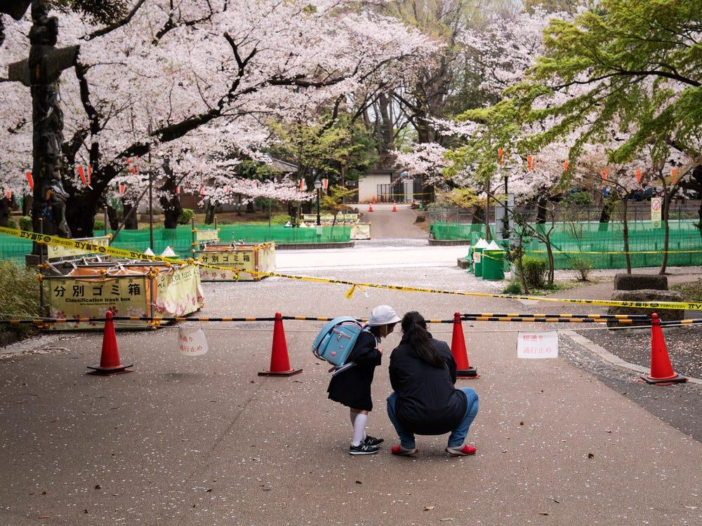 Công viên Ueno, điểm thưởng hoa nổi tiếng của người dân Tokyo cũng đóng cửa hôm 28/3, cấm người dân tụ tập, tổ chức lễ hội ngắm hoa hanami truyền thống. Trước đó, nhiều người dân địa phương đã tụ tập tại công viên Ueno, công viên Yoyogi, tổ chức hanami, bất chấp lời cảnh báo của chính quyền. Ảnh: Getty Images.