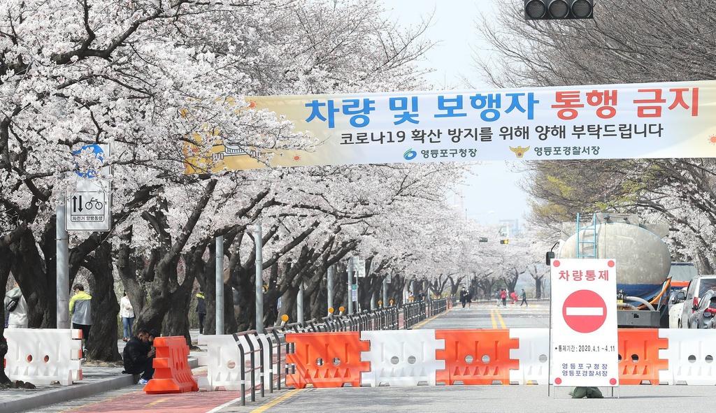 Tại Seoul, Hàn Quốc, các lễ hội hoa anh đào hút khách hàng năm đã bị hủy bỏ do sự bùng phát dịch Covid-19. Lễ hội hoa anh đào hút khách bậc nhất tại Jinhae lần đầu tiên bị hoãn sau 57 năm tổ chức. Đoạn đường ở Yeouido, phía tây Seoul, khu vực ngắm hoa anh đào nổi tiếng cũng lập rào chắn, cấm người đi bộ đến hết ngày 10/4 và cấm ô tô qua lại đến ngày 11/4.