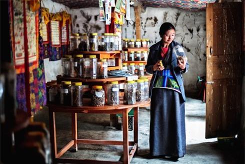 """Một """"Amchi' Tây Tạng đang kiểm tra thuốc"""