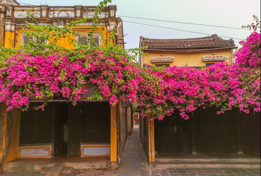 """Hội An nổi tiếng với những căn nhà, đền chùa cổ mang kiến trúc đa dạng từ nhiều nền văn hóa trên thế giới. Tuy nhiên, theo Hội An World Heritage, sự giao thoa văn hóa và kiến trúc không phải điểm duy nhất gây ấn tượng khi du khách tới đây. """"Điểm nổi bật nhất của phố cổ này là những tòa nhà đắm mình trong sắc vàng đặc trưng"""", trang này viết. Ảnh: Nguyen Phan."""