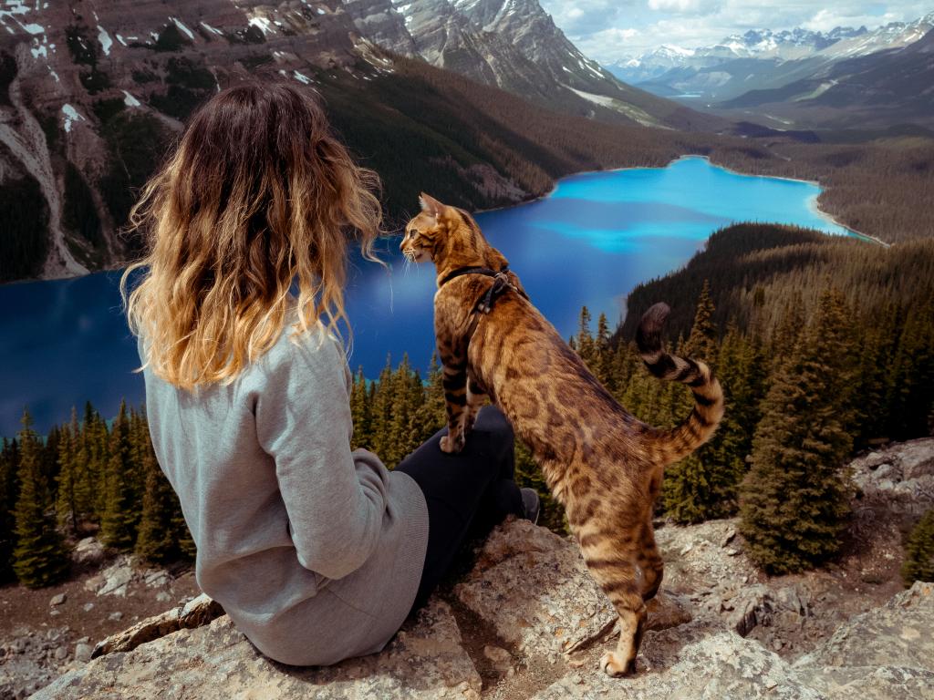 """Năm nay, cuốn sách Travels of Suki the Adventure Cat (Hành trình khám phá của mèo Suki) dự kiến xuất bản vào tháng 3. Giới thiệu về cuốn tự truyện này, Amazon viết: """"Suki là một con mèo Bengal tuyệt đẹp đến từ Canada, kẻ không sợ đưa bàn chân nhỏ bé của mình vào những cuộc phiêu lưu lớn. Từ các lâu đài ở châu Âu đến bờ biển đầy nắng của California, những chuyến du lịch của Suki chứng minh rằng bất kỳ ai cũng có thể lang thang khắp thế giới""""."""