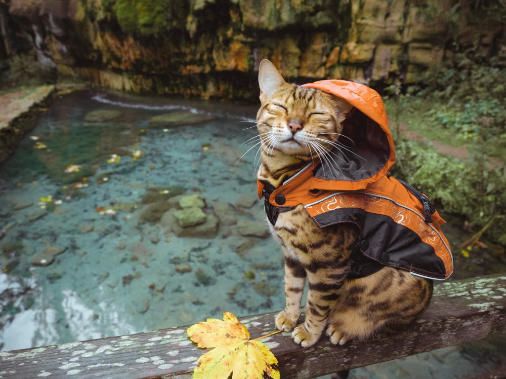 """Con mèo đa tài này còn gây ấn tượng với gần 100 sản phẩm mang """"thương hiệu Suki"""" được bán trên trang thương mại điện tử. Đó là ốp lưng, tách cà phê, áo, logo in hình Suki và những poster được phối màu thu hút."""