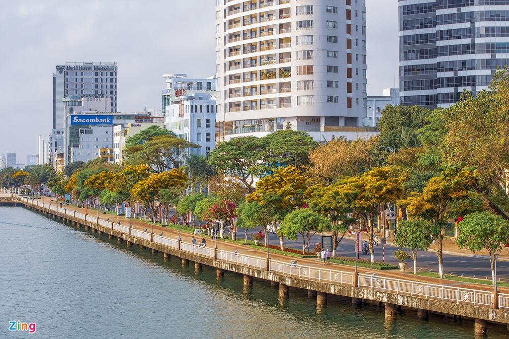 Những ngày tháng 4, thành phố Đà Nẵng như khoác trên mình một lớp áo mới. Đó là khi hàng hoa sưa vàng nở rực rỡ trên các con phố.