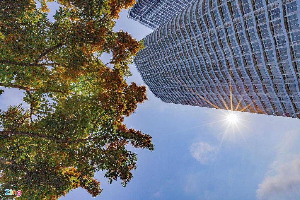 Những cây hoa sưa vàng trở thành điểm nhấn cho những dãy nhà cao tầng, đồng thời còn tạo bóng mát cho những ngày hè cận kề. Mua hoa sua ruc vang o Da Nang hinh anh 7 hoa_sua_zing9.jpgMua hoa sua ruc vang o Da Nang hinh anh 8 hoa_sua_zing10.jpg Hoa nở trên nhiều con phố, trở thành hình ảnh quen thuộc đối với người dân và du khách khi đặt chân đến mảnh đất đáng sống nhất Việt Nam này.