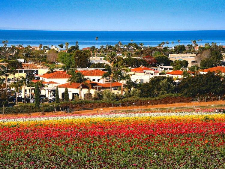 Cánh đồng hoa tại thành phố Carlsbad, trải dọc bờ biển California, Mỹ, gây ấn tượng với loài mao lương có tới 16 sắc màu khác nhau. Những luống hoa trắng, đỏ, vàng, cam, nâu, tím... được trồng thẳng hàng, tạo nên bức tranh thiên nhiên tuyệt đẹp.