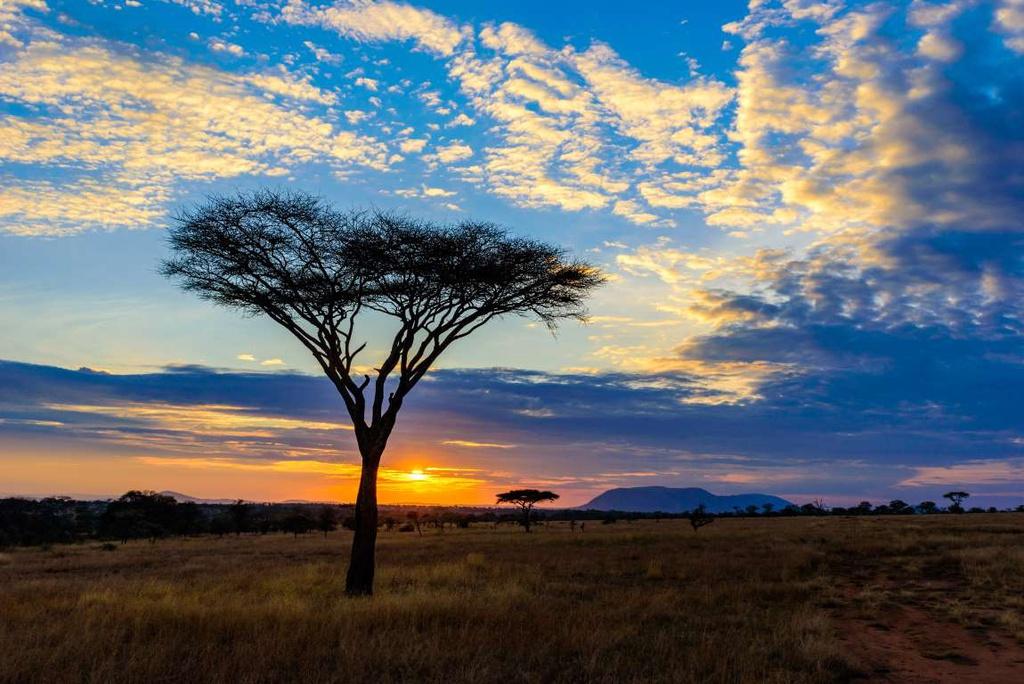 """Khu bảo tồn động vật hoang dã Serengeti (Tanzania) mang đến cảnh tượng thiên nhiên ngoạn mục. Những con sư tử bản địa, báo, voi, tê giác và trâu """"chơi đùa"""" trên vùng đất hoang vu rộng lớn, dưới ánh hoàng hôn, gợi nhớ đến bộ phim huyền thoại """"Vua sư tử""""."""