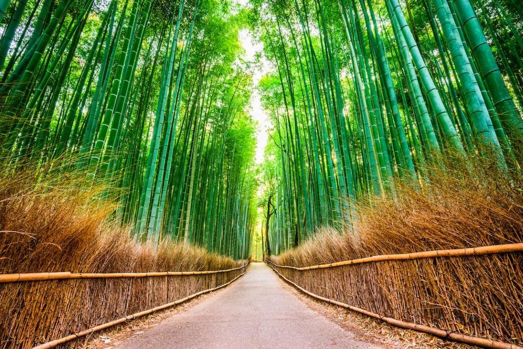 Rừng tre Arashiyama (Nhật Bản) có từ rất lâu và sớm trở thành điểm đến của nhiều người dân Nhật Bản xưa. Trên khoảng diện tích rộng lớn, hàng triệu thân tre vươn lên thẳng tắp, xanh tốt, tạo khung cảnh rợp mắt. Khu rừng xanh mát và yên tĩnh như một thế giới tách biệt hoàn toàn với cuộc sống nhộn nhịp bên ngoài.