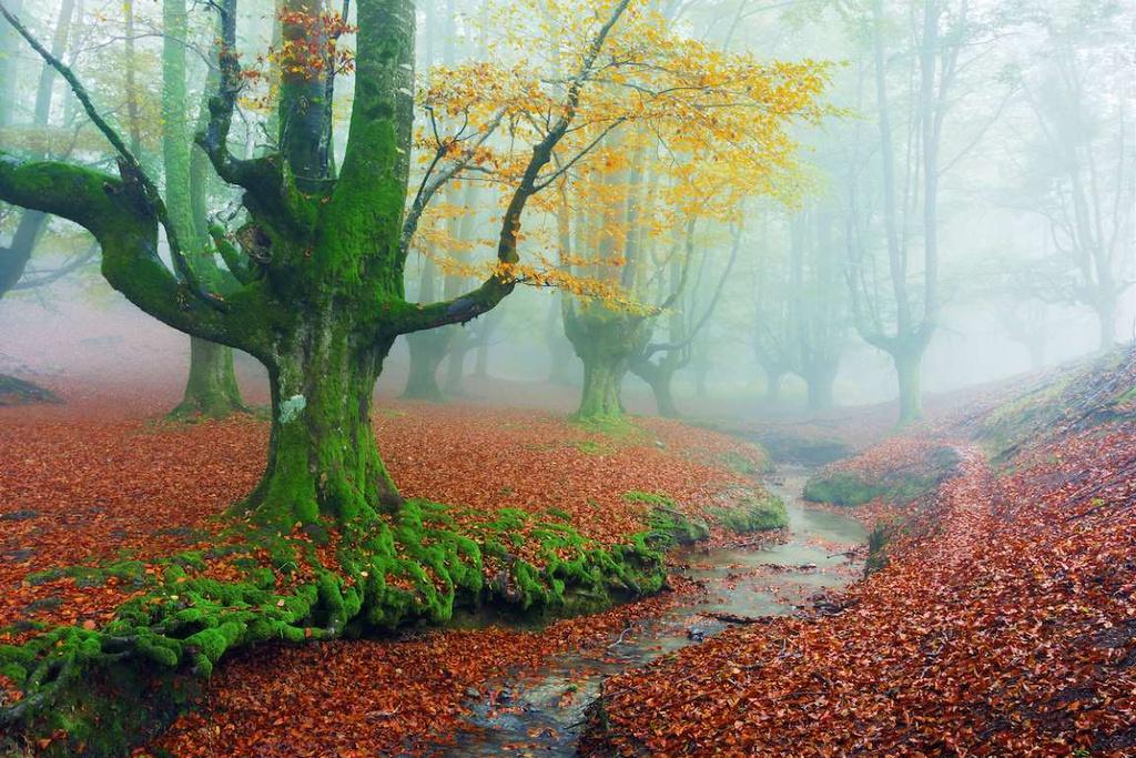 Rừng Otzarreta (Tây Ban Nha) thuộc công viên tự nhiên Gorbea. Những cây cổ thụ cùng không gian sương khói mờ ảo khiến khu rừng trở nên huyền bí hơn. Thảm thực vật ở đây cũng gây chú ý với nhiều loài cây có hình dáng lạ.