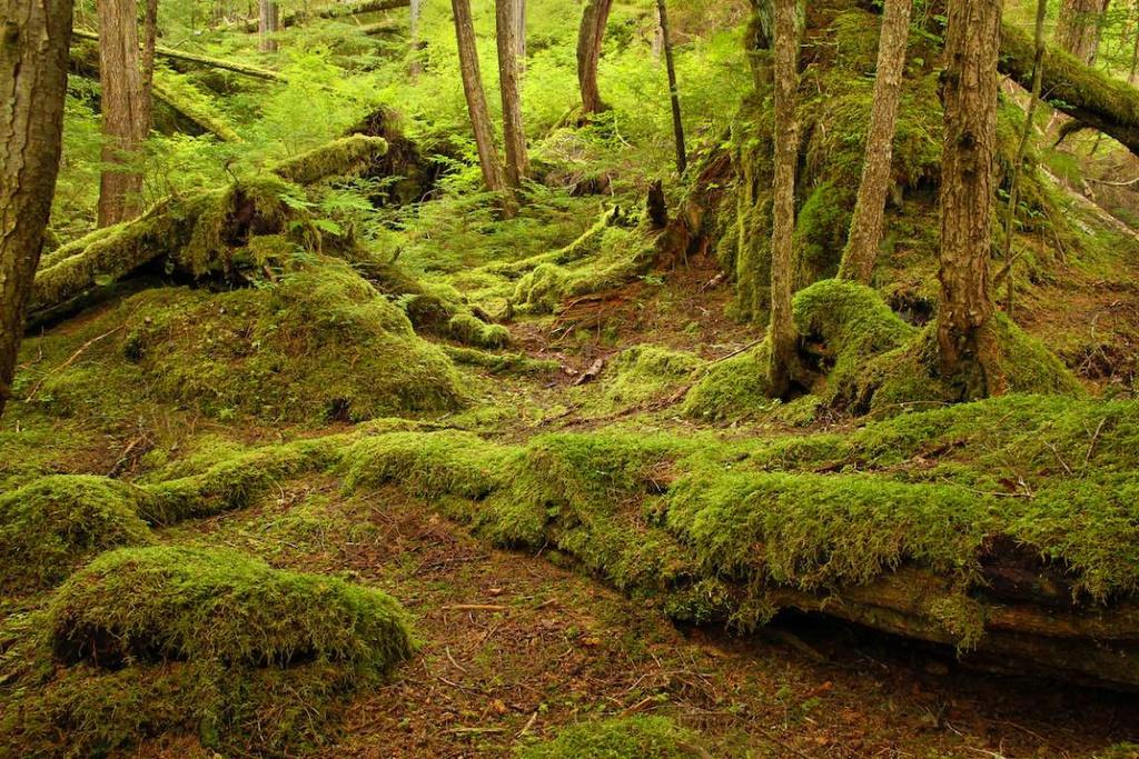 Rừng quốc gia Tongass (Mỹ) là khu rừng lớn nhất nước Mỹ và là nơi sinh sống của nhiều loài động thực vật quý hiếm, có nguy cơ tuyệt chủng. Đây cũng là rừng mưa ôn đới ven biển lớn nhất thế giới còn nguyên vẹn đến ngày nay với nhiều loại cây có tuổi đời từ 800-1.000 năm.