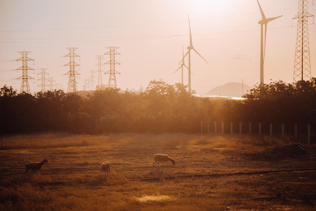 Với diện tích 9,6 ha cùng 16 trụ tua bin, điện gió Đầm Nại là điểm hẹn săn ảnh của nhiều bạn trẻ mỗi khi hoàng hôn buông xuống. Dưới ánh chiều tà, cánh đồng ẩn hiện mờ ảo, điểm nhấn là bầy cừu gặm cỏ, xa xa là đồi núi hùng vĩ, tất cả tạo nên cảnh tượng đẹp như cổ tích.