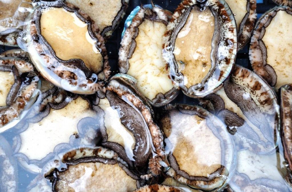 Từ lâu, bào ngư được xem là một trong những hải sản quý hiếm, có giá trị dinh dưỡng cao. Được thiên nhiên ưu đãi, đảo Jeju (Hàn Quốc) là một trong những nơi có loại thực phẩm đắt đỏ này. Ảnh: Gosouth.