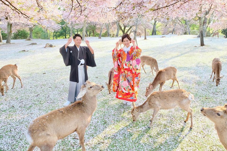 Kazuki Ikeda, nhiếp ảnh gia người Nhật, đã tổ chức buổi chụp hình cưới tại công viên cho một cặp đôi. Thay vì chú ý cặp đôi sắp cưới, dân mạng Nhật Bản quan tâm hơn đến những con nai đang ngắm anh đào giữa công viên vắng vẻ trong bức ảnh của anh.