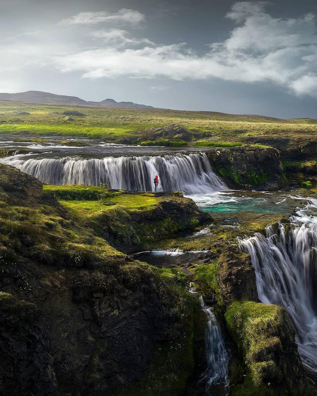 """Theo giáo sư sinh thái học của đại học Iceland, Ingibjorg Svala Jonsdottir, có khoảng 606 loại rêu khác nhau được tìm thấy ở quốc đảo này. Loài phổ biến nhất, Woolly Fringe Moss thường được gọi đơn giản là rêu Iceland, """"thống trị"""" các cánh đồng dung nham trên khắp miền Nam và Tây của hòn đảo."""