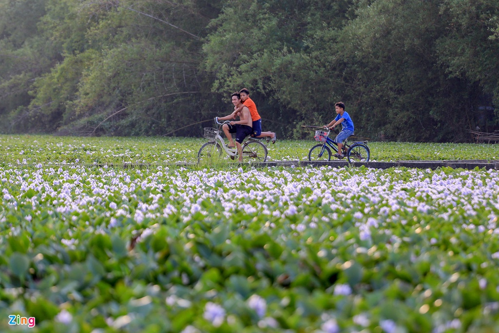 Những ngày hè oi ả, được đạp xe, rảo bước giữa biển lục bình này cũng khiến tâm hồn mỗi người trở nên thư thãi, dễ chịu.
