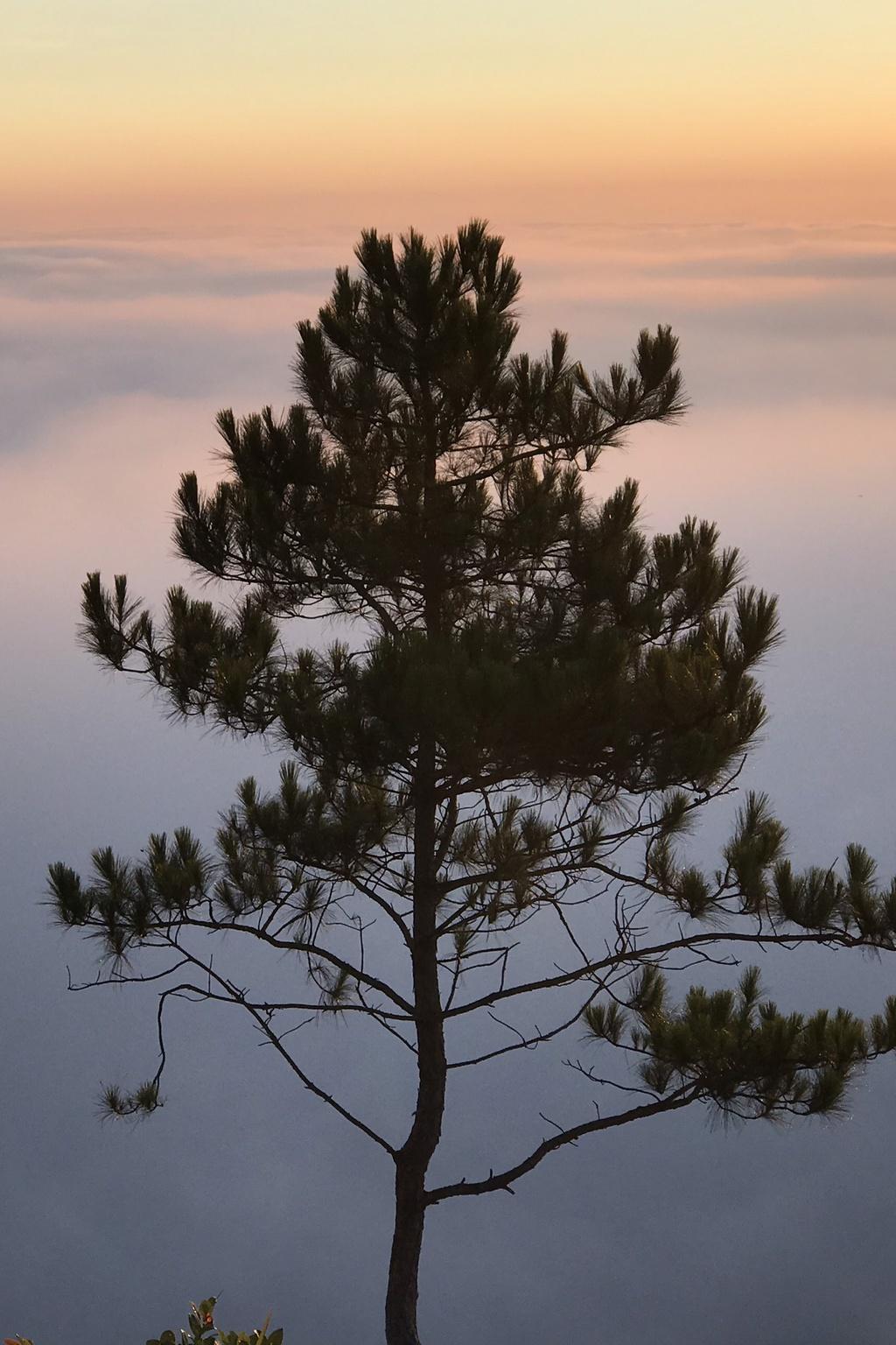 """Nhiều người may mắn săn mây thành công gọi ví đó như """"quang cảnh đẹp tựa chốn thần tiên"""". Mây trắng, bồng bềnh như dải lụa phủ kín một khoảng trời. Tùy theo ánh nắng mới của bình minh hay sắc hồng cam buổi hoàng hôn, màu mây cũng biến đổi đẹp khôn lường. Cái lạnh tê tái trong buổi săn mây là trải nghiệm khiến nhiều du khách nhớ mãi."""
