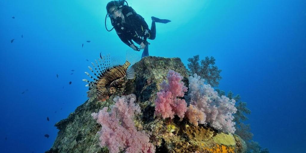 Đến đây, ngoài ngắm nhìn thác nước dưới lòng biển, du khách còn có nhiều trải nghiệm thú vị như lặn ngắm san hô, chèo thuyền kayak, ngắm cảnh bằng trực thăng, hay thưởng thức hải sản tươi ngon. Ảnh: Mauritius.