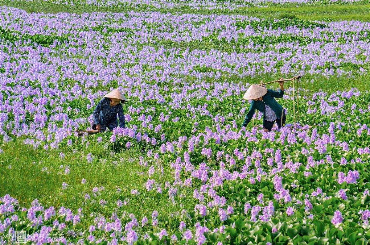Vẻ đẹp làng quê Quảng Nam – iVIVU.com